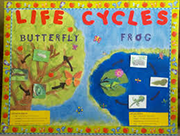 Books about Life Cycles